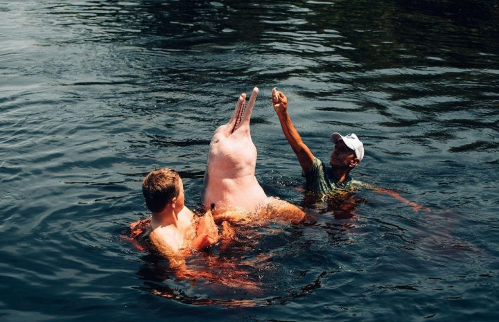 Pink river dolphins native to the Amazon